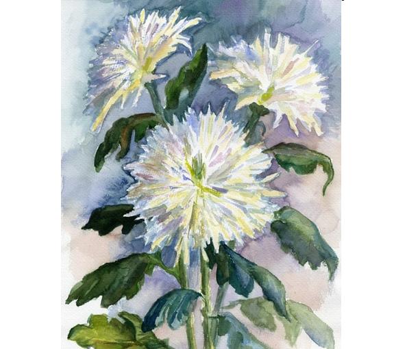 Хризантемы рисунок акварелью поэтапно, картинки