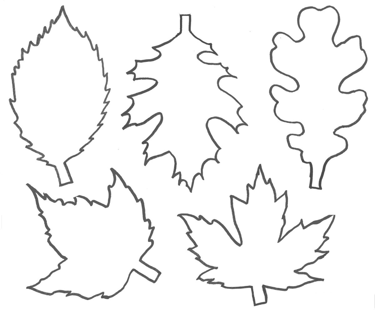 Лист с дерева картинки шаблоны