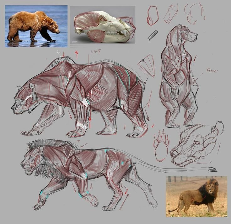 Анатомия животных картинка