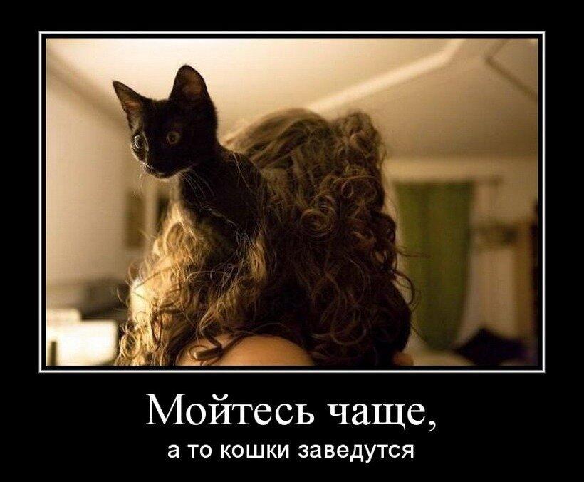 герани демотиваторы на тему кошек осмотре затворной