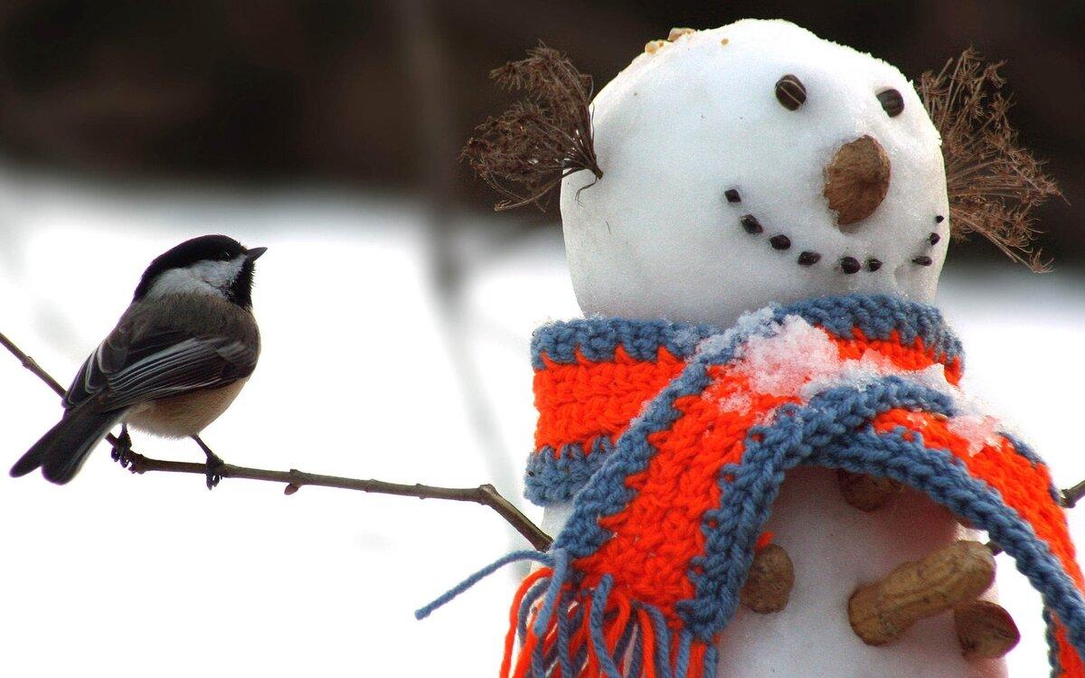 Приколы картинках зима