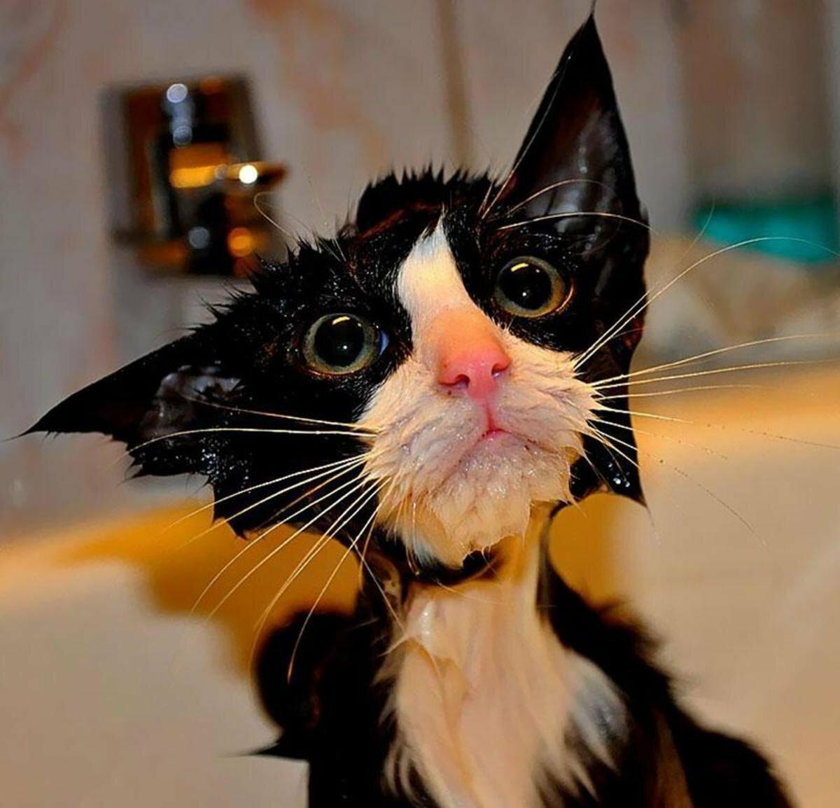Картинки смешные кошка, самая лучшая