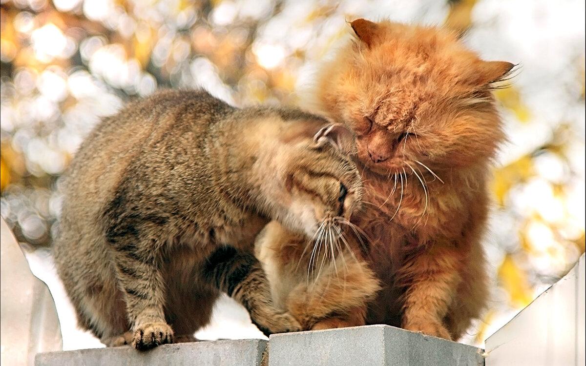 картинки кошек мур зимой
