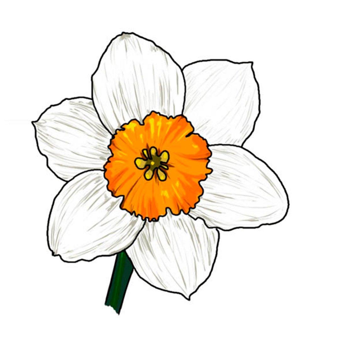 цветы в картинках несложные каталоге
