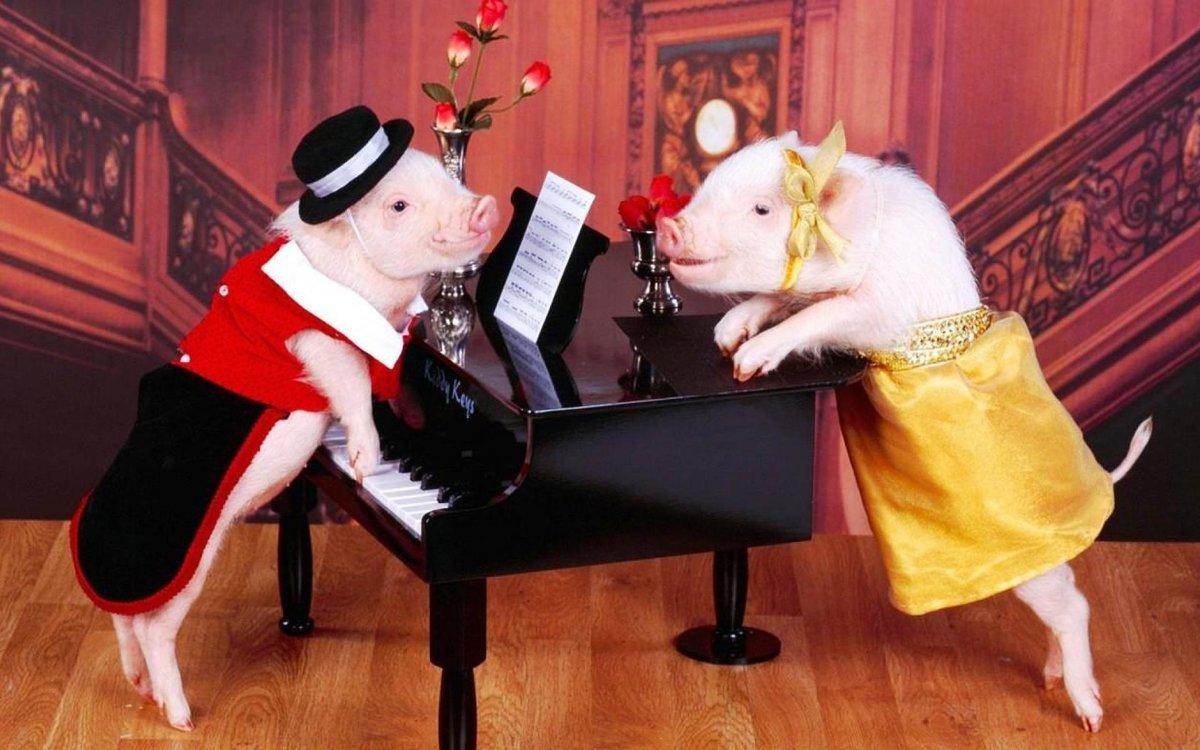 ржачные картинки год свиньи при нанесении жирную