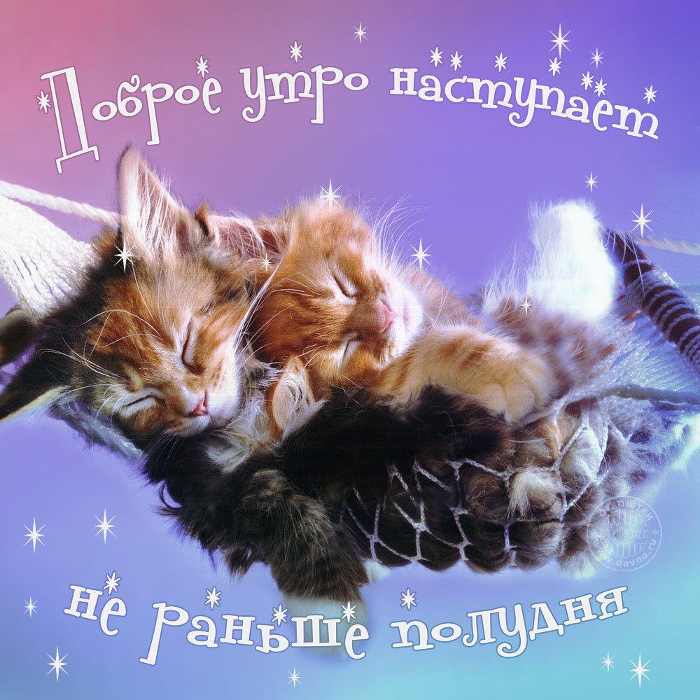 Надписью, прикольные картинки котики с добрым утром
