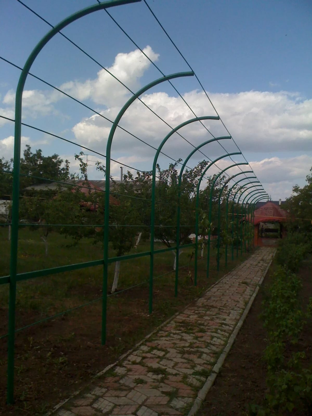 заре каркас для винограда фото является символом традиций