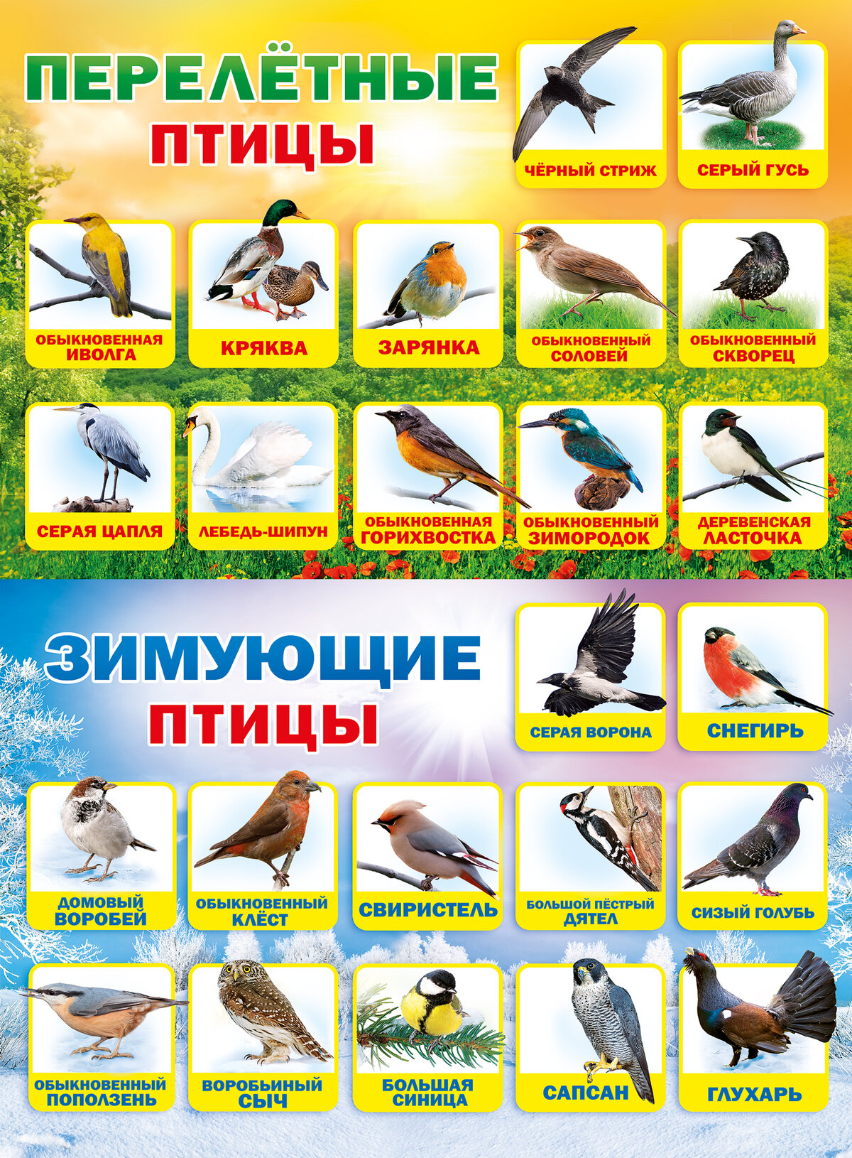 лучшую краску птицы донбасса фото с названиями и описанием одинакового мнения, какое