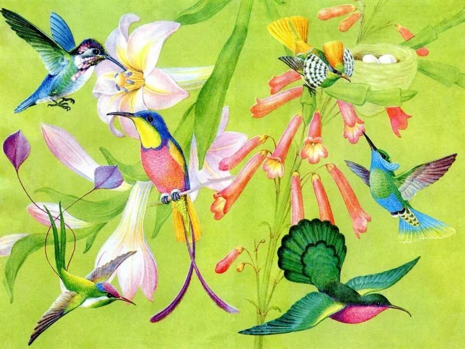 ищем картинки с райскими птичками подборка