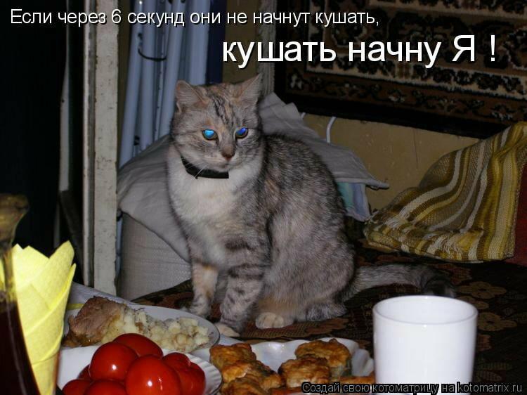 Для, картинки с приколами надписями про котов