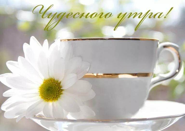Доброе утро картинки с ромашками и кофе хорошего дня