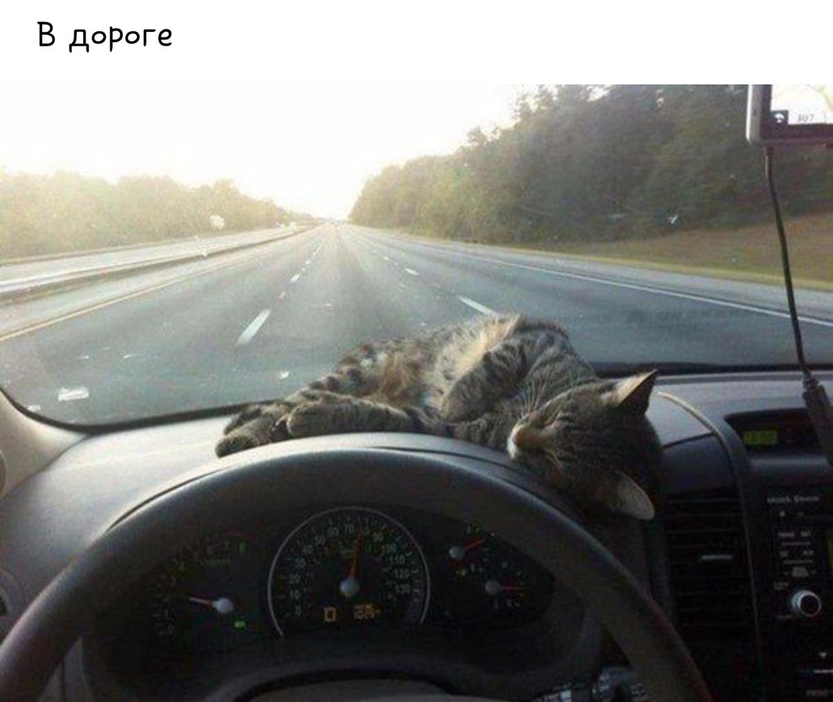 Масленица, картинки в дорогу смешные любимому