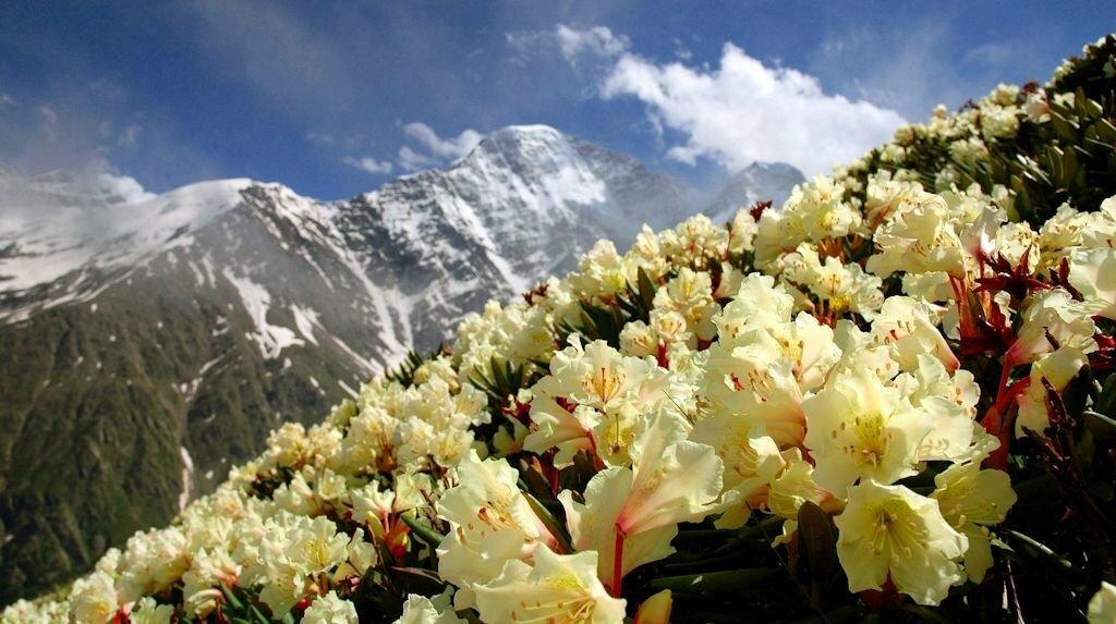 С днем рождения фото горы, картинки