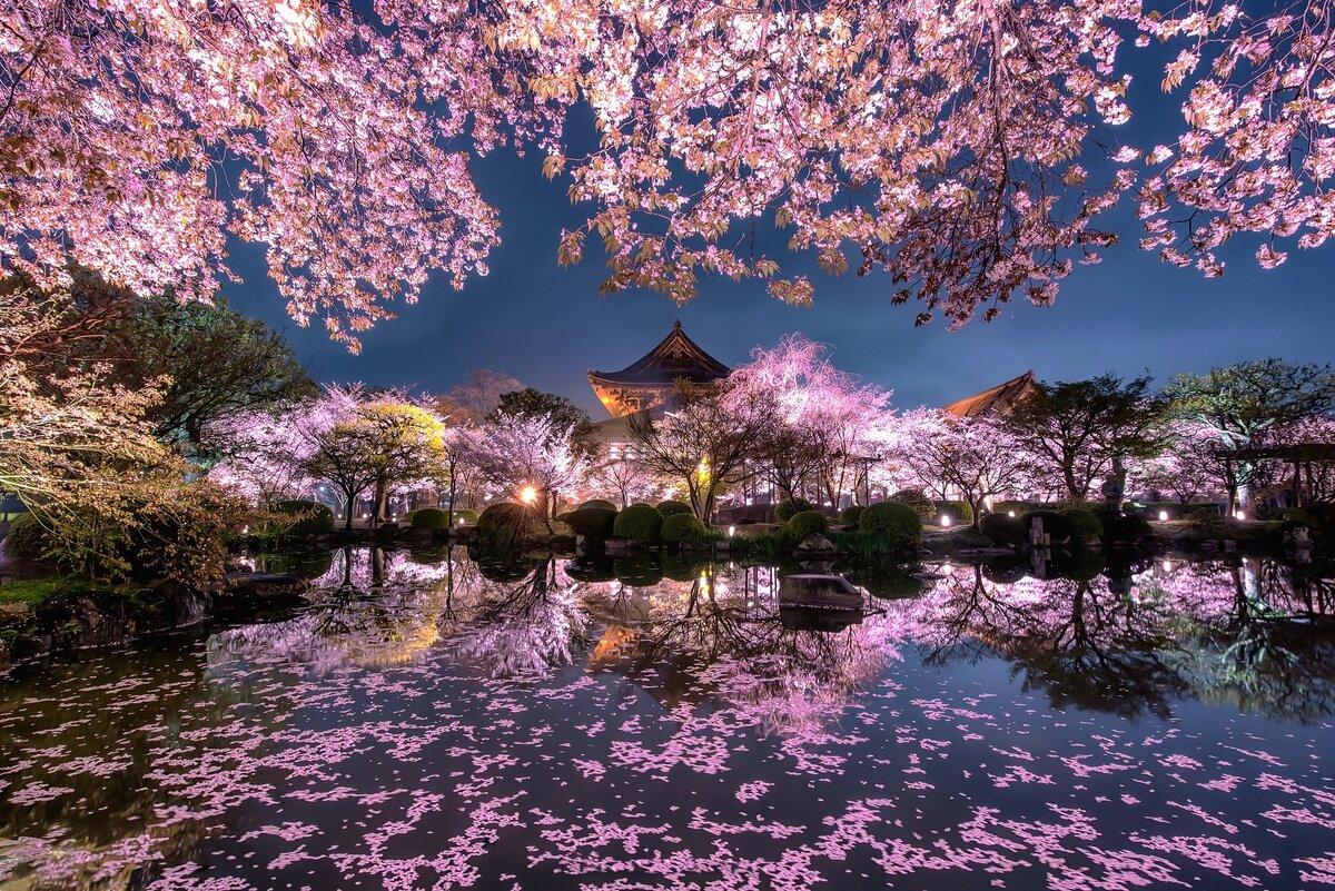 Японские картинки ночь, годовщиной