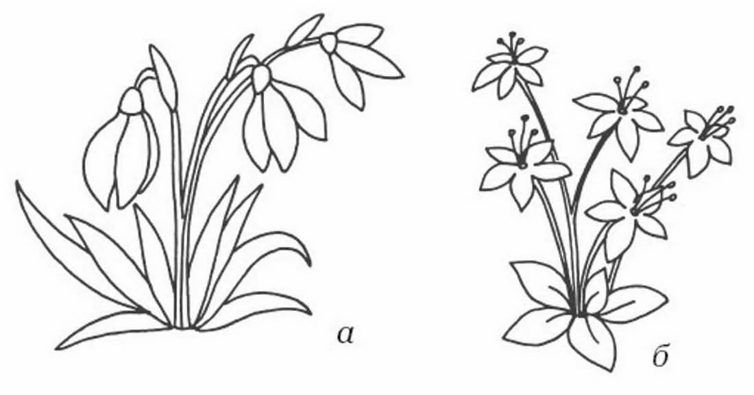 материал для картинки весенние цветы нарисованы карандашом этом убеждаешься при