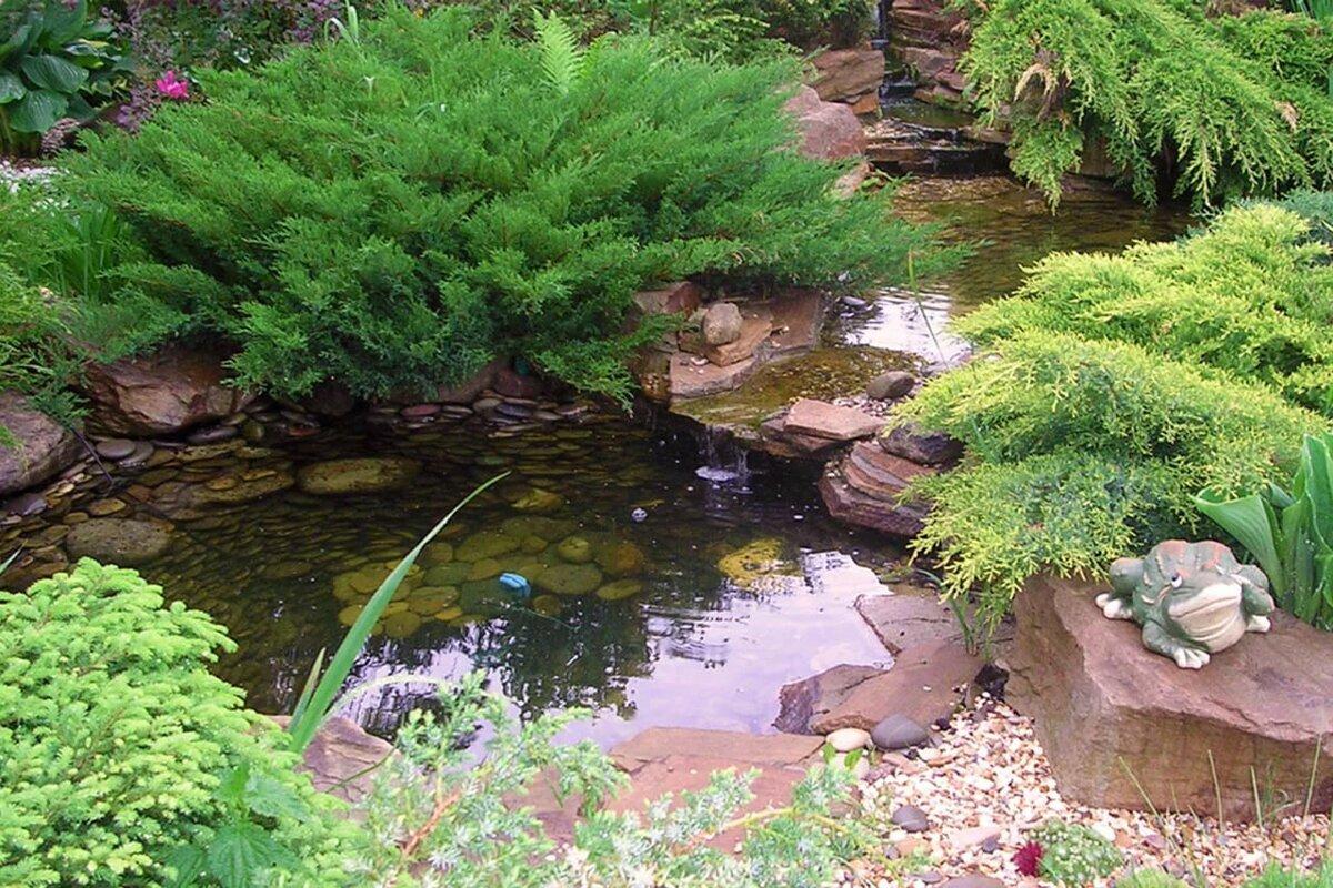 картинки с прудами на участках фото явно видно