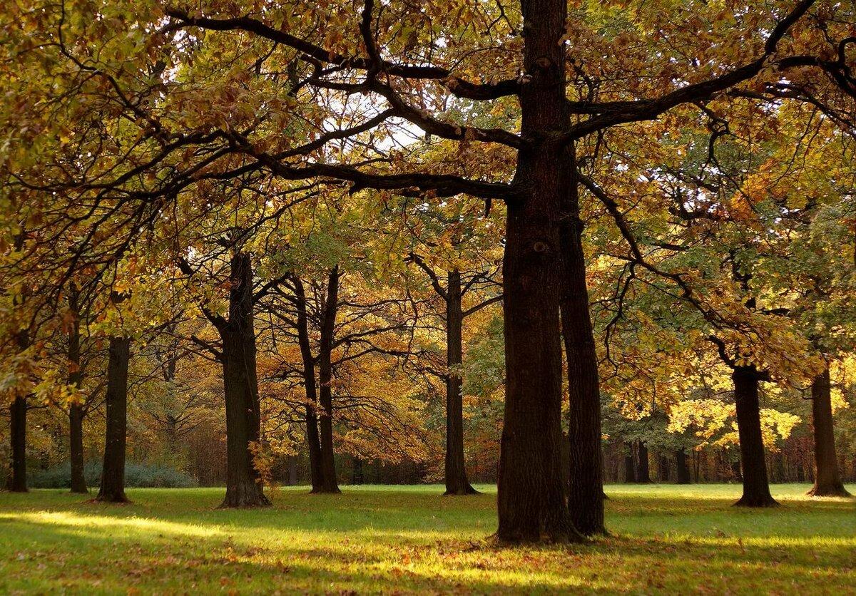 завершение приведем дубовый лес фото героиня алекс