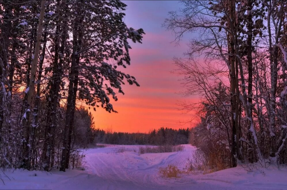 Фото в зимнем лесу вечером