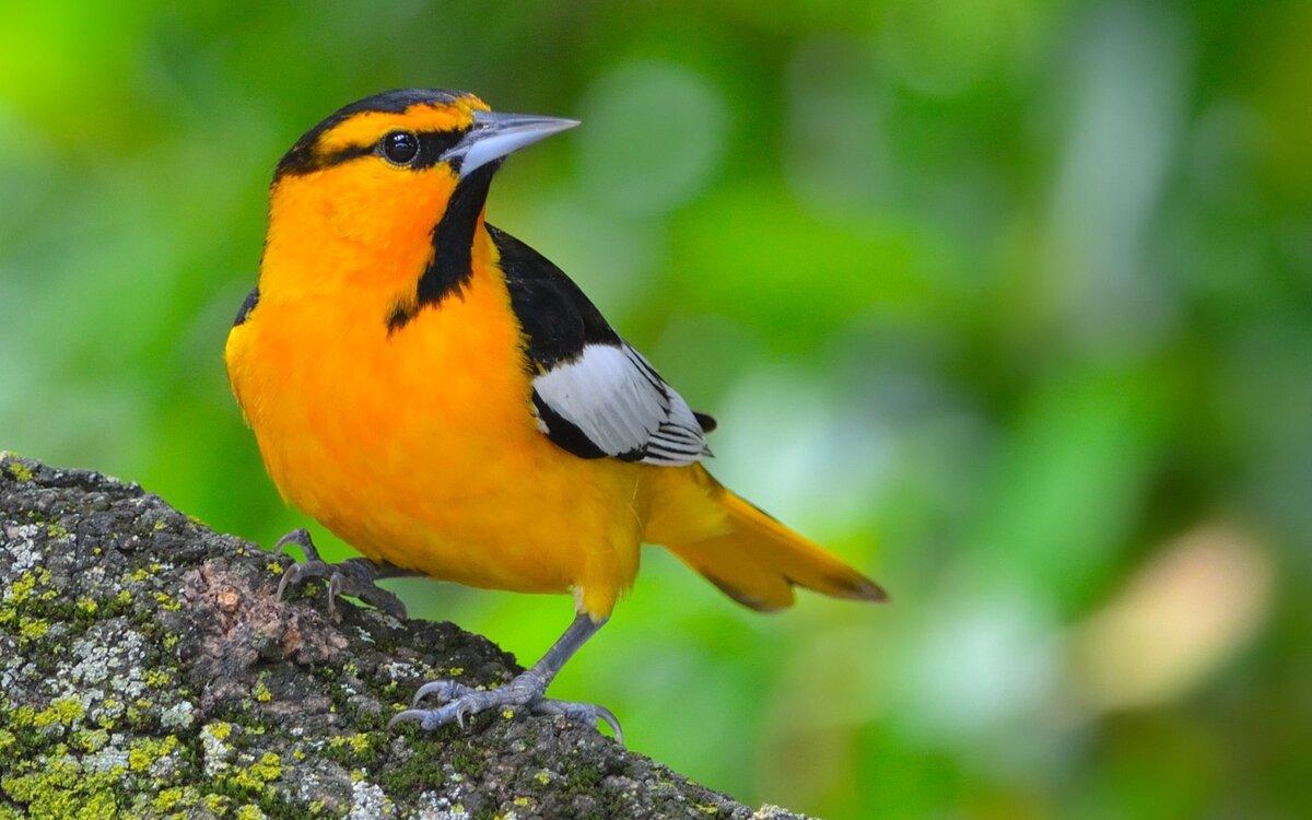Фото или картинки с изображением птиц