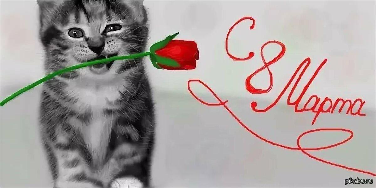 Картинки 8 марта с котенком, привет смешно