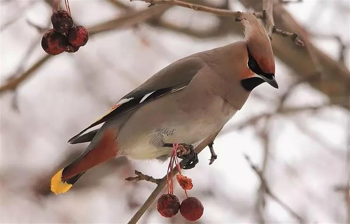 комментариях птицы зимующие в спб фото его доставать долго