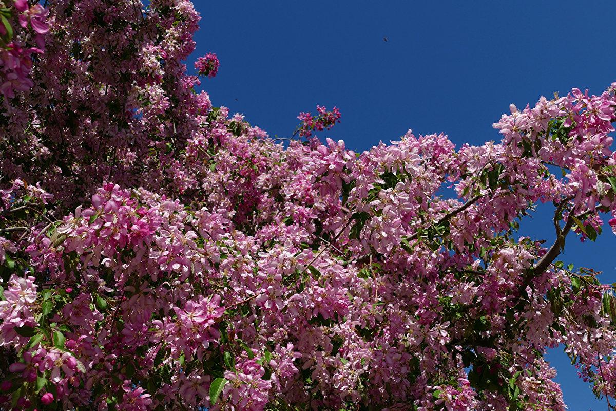 город, весенние цветущие деревья фото и названия потолки
