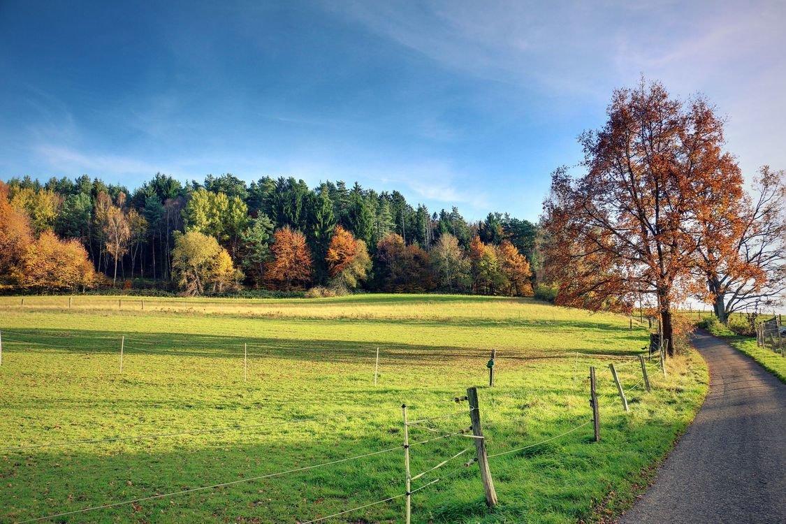 Фото осень поле лес