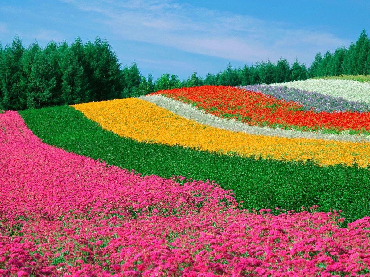 цветы со всего света фото