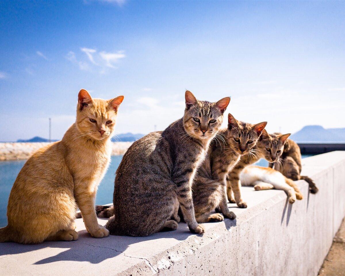 картинки котята в море диплом