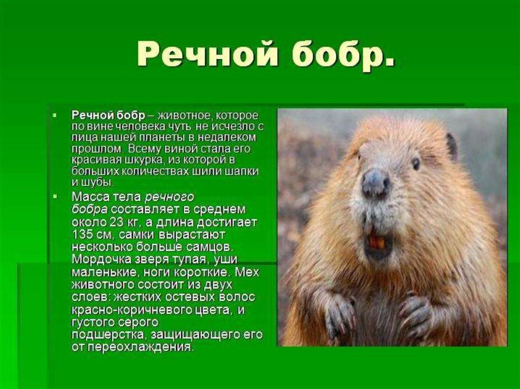 фото и описание животного россии если наяву