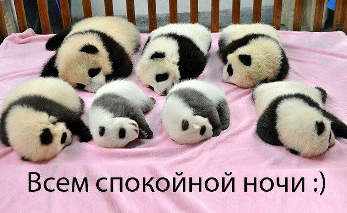 Добрым, спокойной ночи всем картинки прикольные