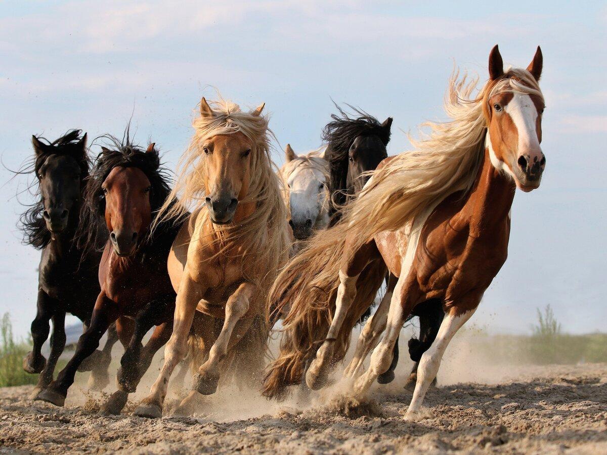 В картинках лошадей