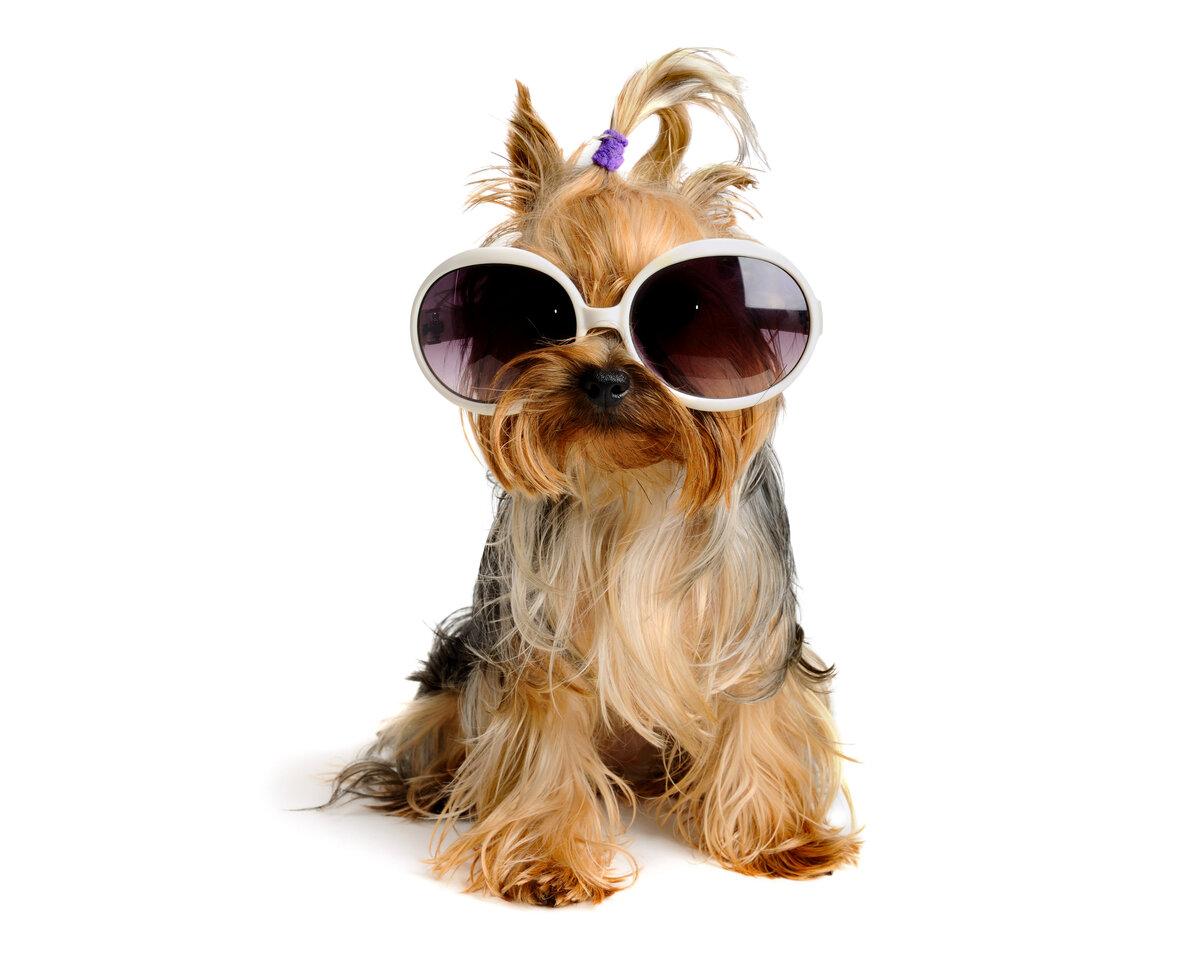 Для, прикольные картинки с собаками на телефон