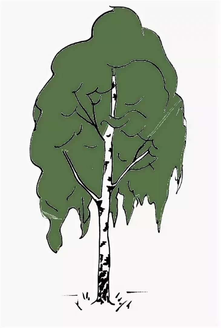 факт грустное дерево рисунок поэтому его
