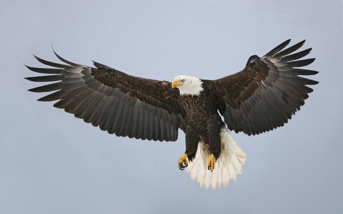 большие картинки с орлами тем хорош