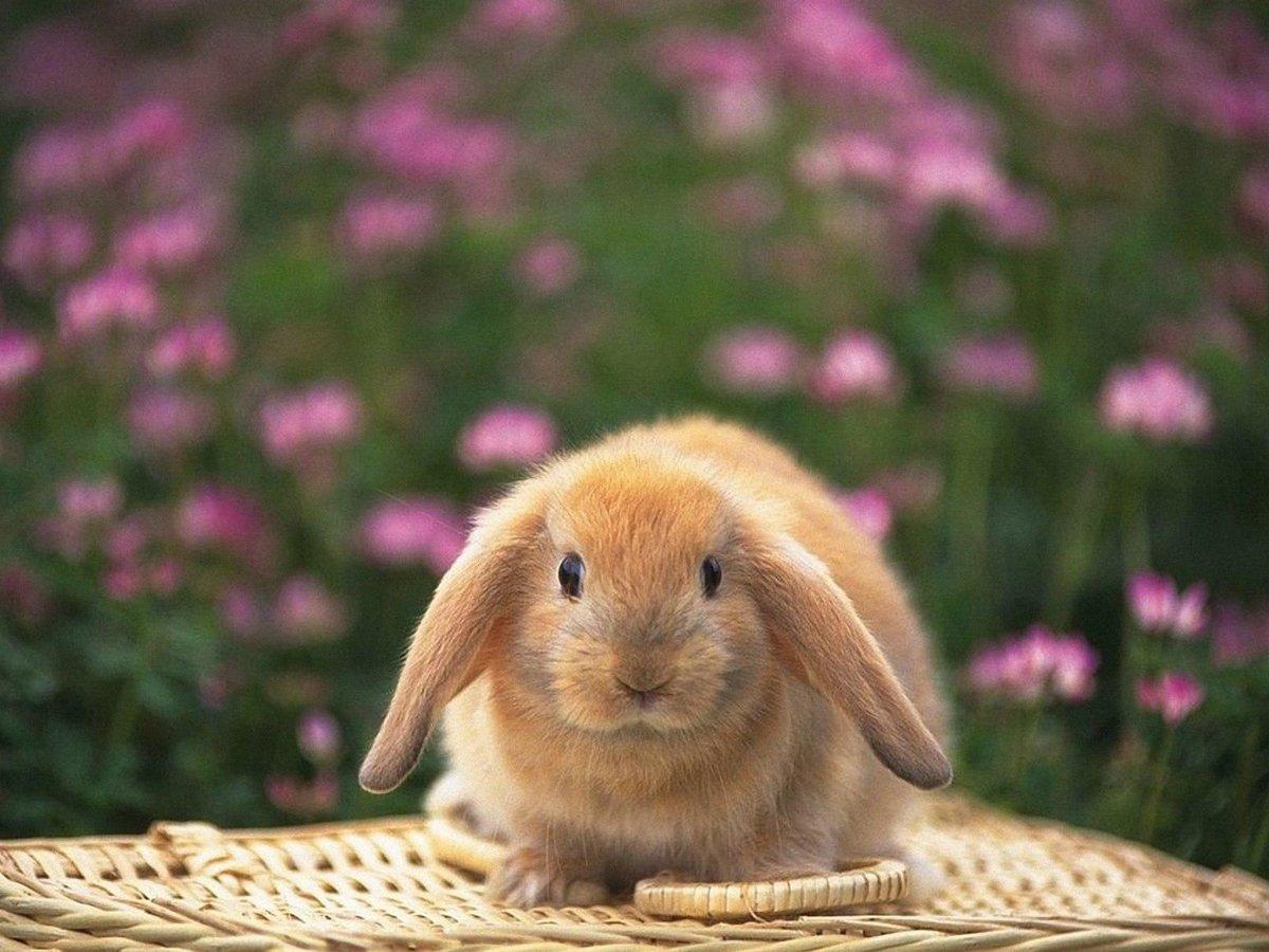 Поздравлениями, картинки с зайчиками милыми