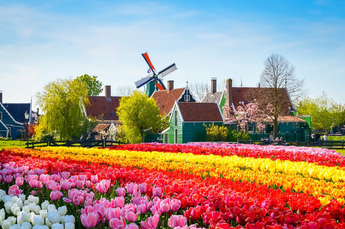 картинка города голландия тюльпаны палитра