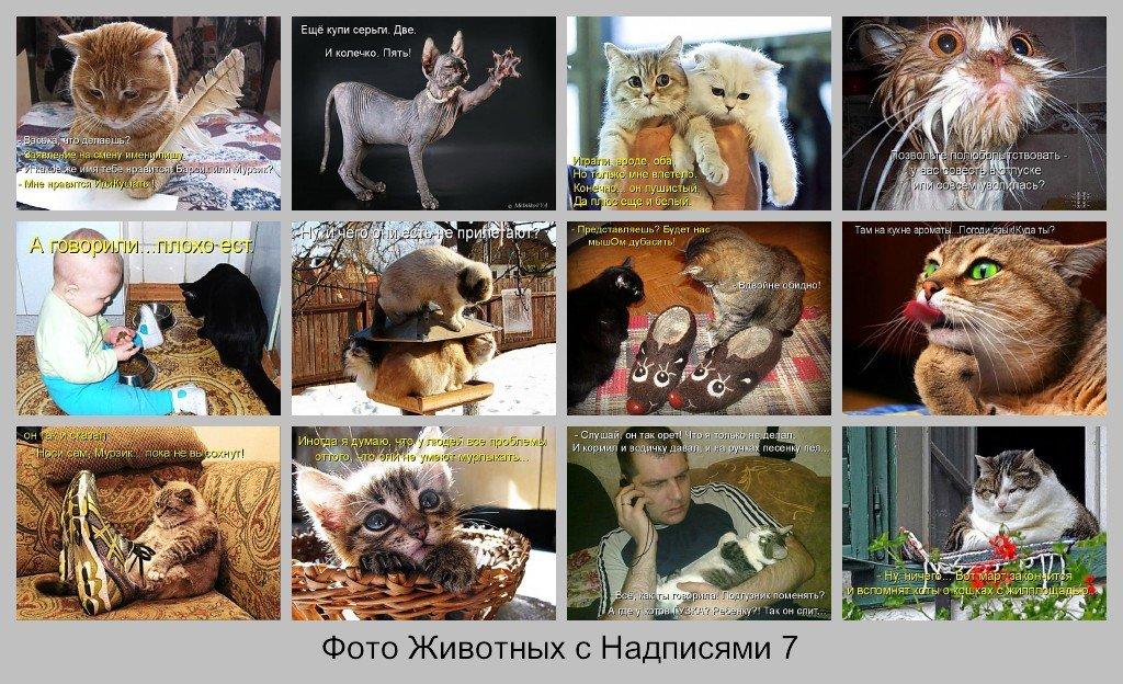 Фото Животных с Надписями