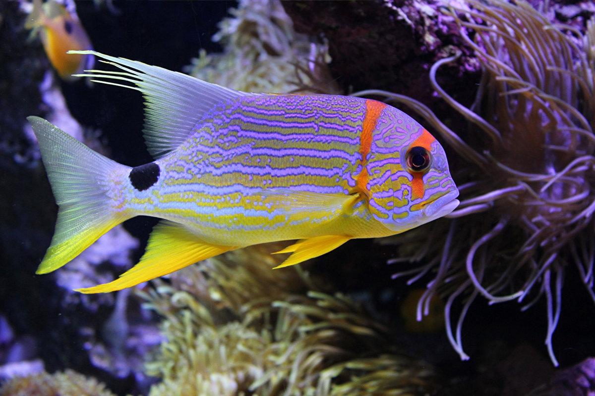 Морская рыба картинки