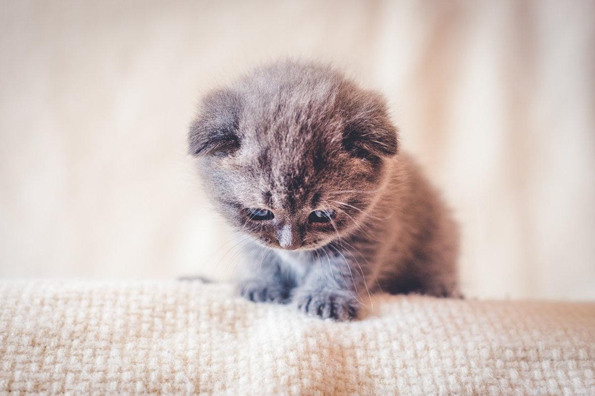 картинки хорошенькие котята хочешь