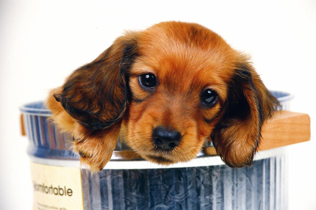 Открытка днем, красивые собачки картинки на телефон