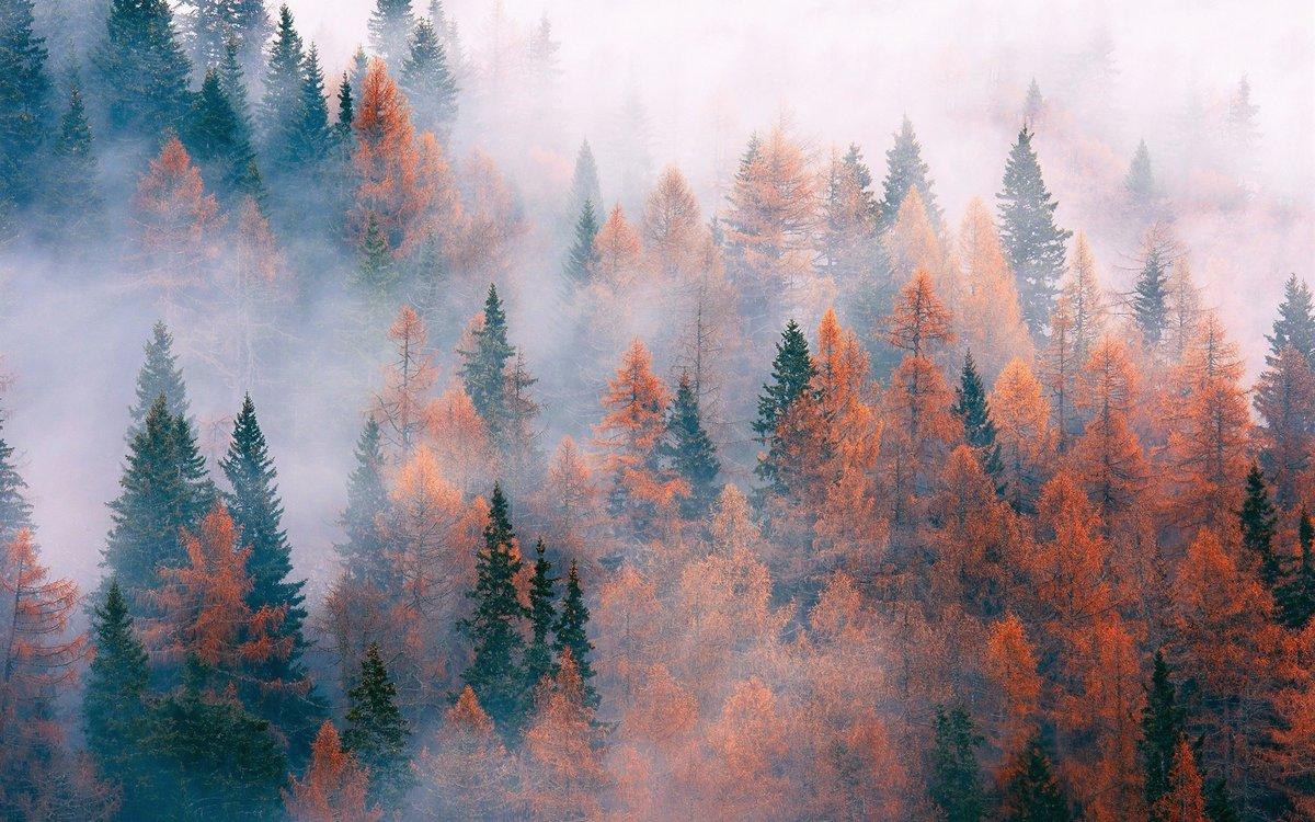 Лес, деревья, туман, осень