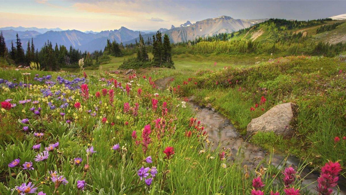 Цветущий весенний луг картинки