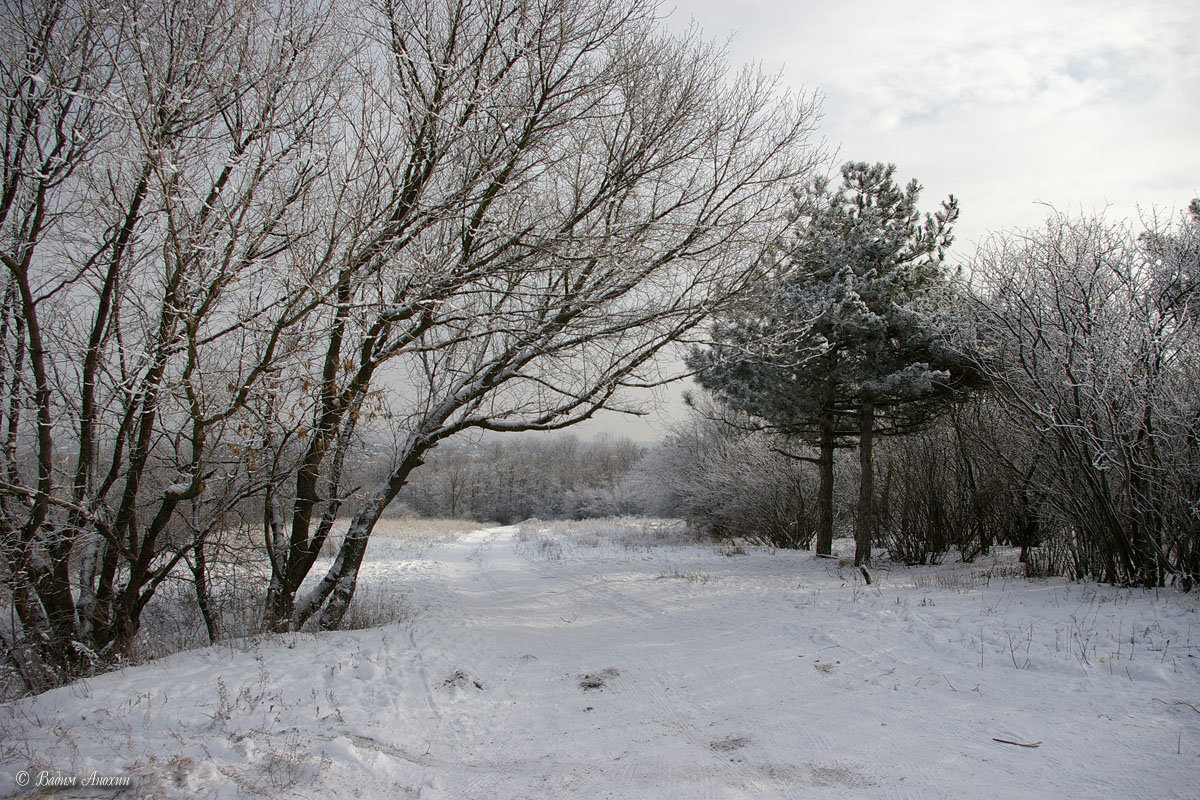 Пасмурный зимний день фото погоде курске