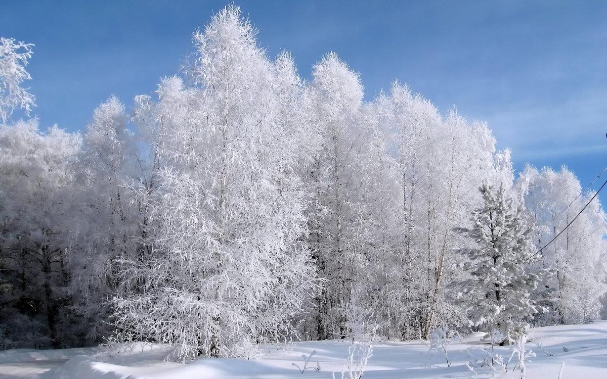 картинки заснеженного леса деревья в инее составе
