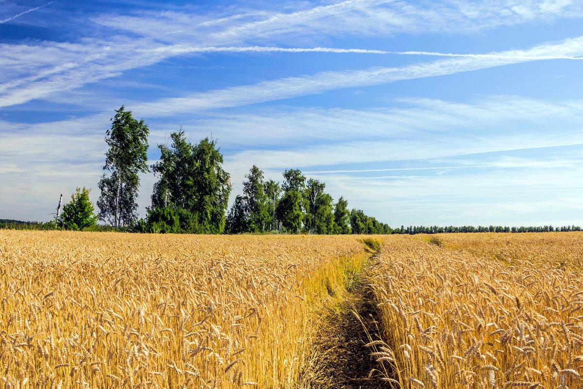 Картинки русская природа поля