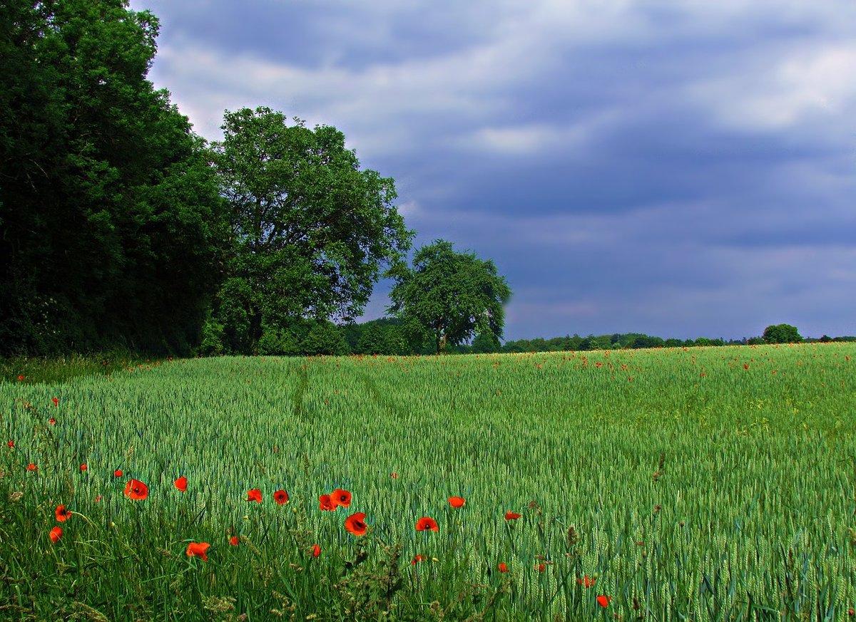 Фото русских полей и лугов