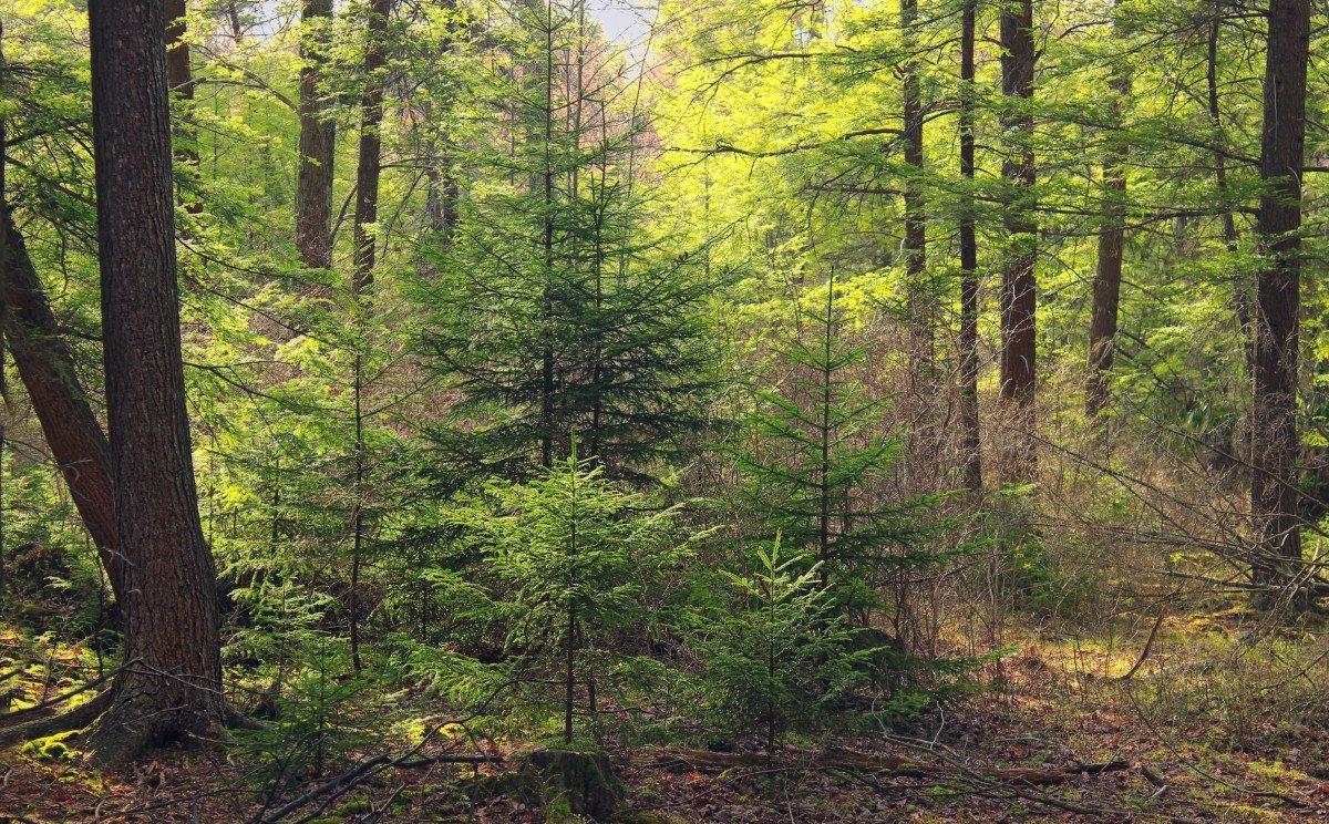 экосистема леса фото убийцы настаивал