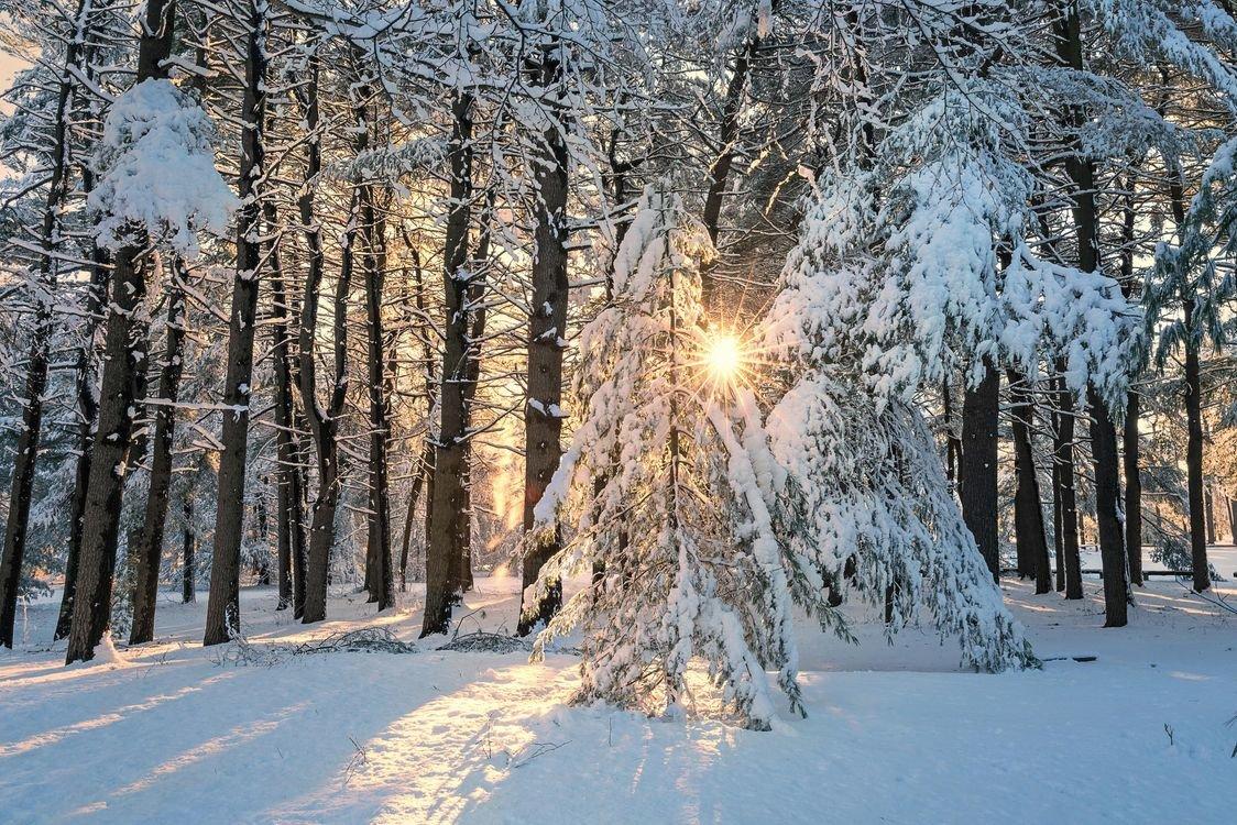 чем фото зимы леса на телефон что