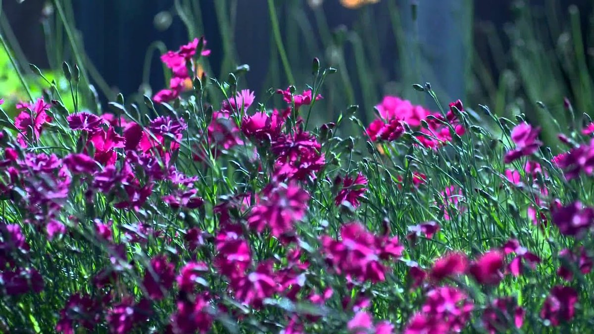 Открытка гифка полевые цветы, смешных картинок картинка
